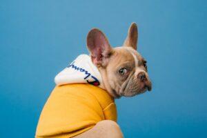 Animals Hit the Spotlight on TikTok